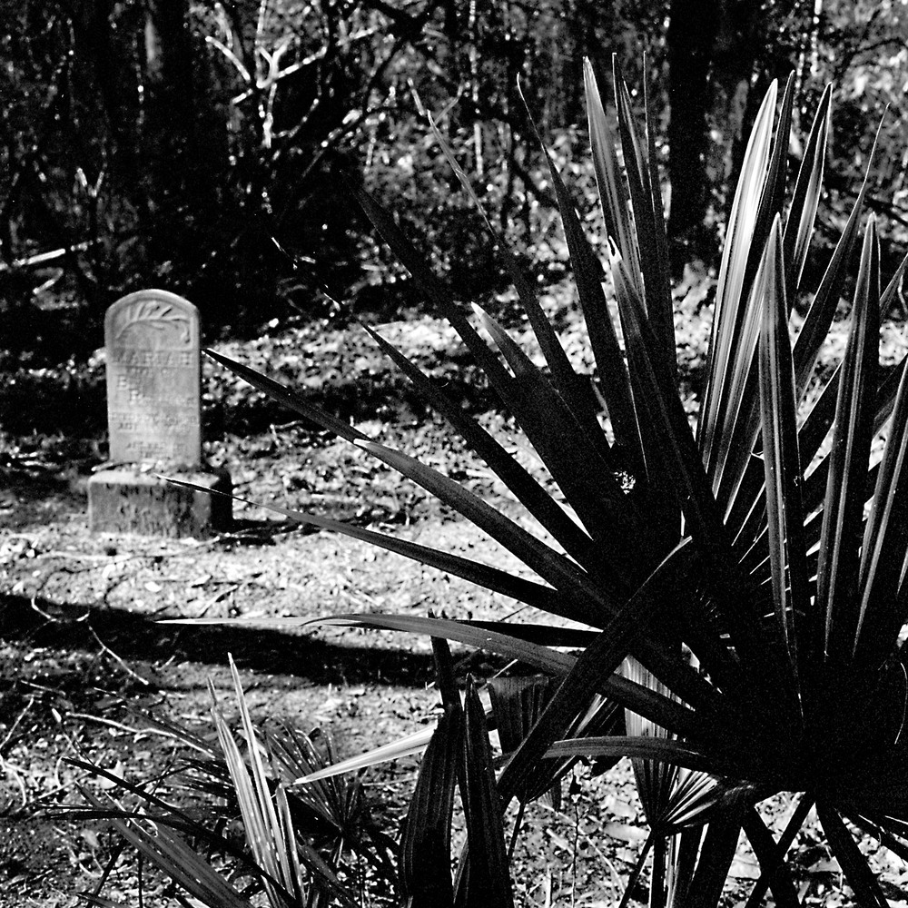 03-04-15-Hass-Charleston-J.jpg