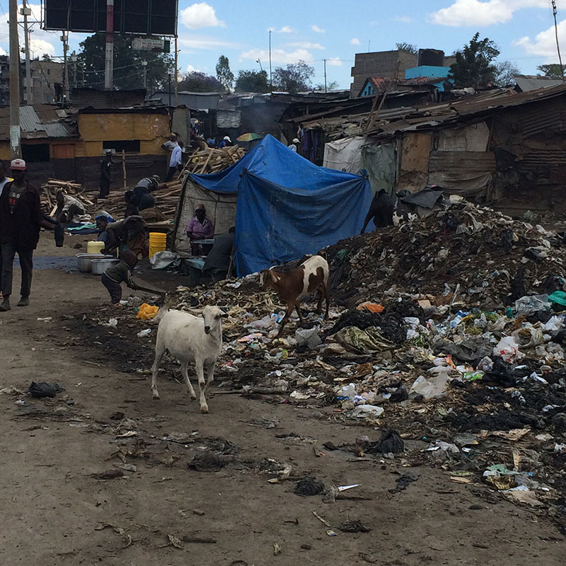 Livestock and rubbish on the streets increase disease risk