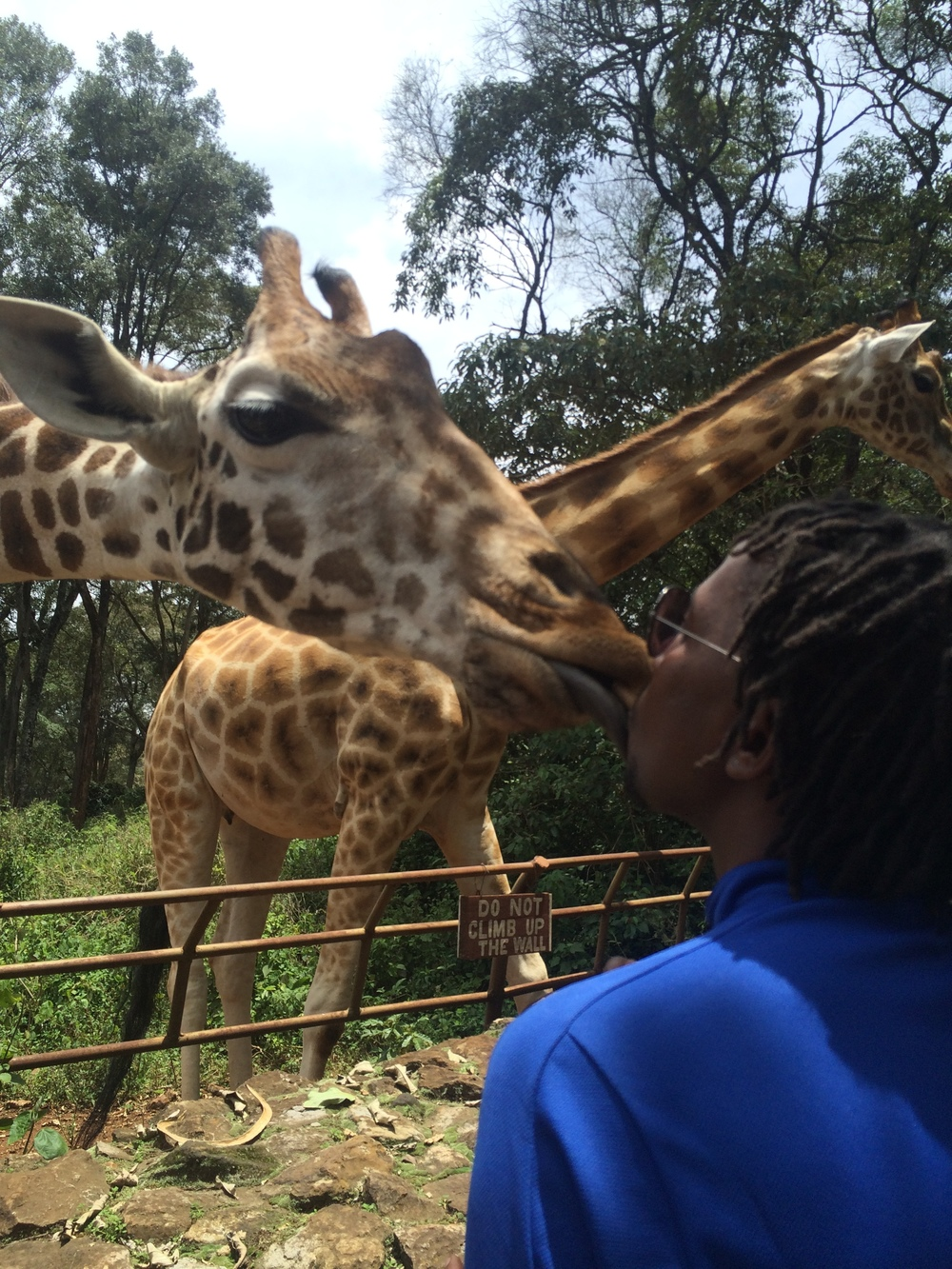And time to relax! Kissing the residents at the giraffe centre