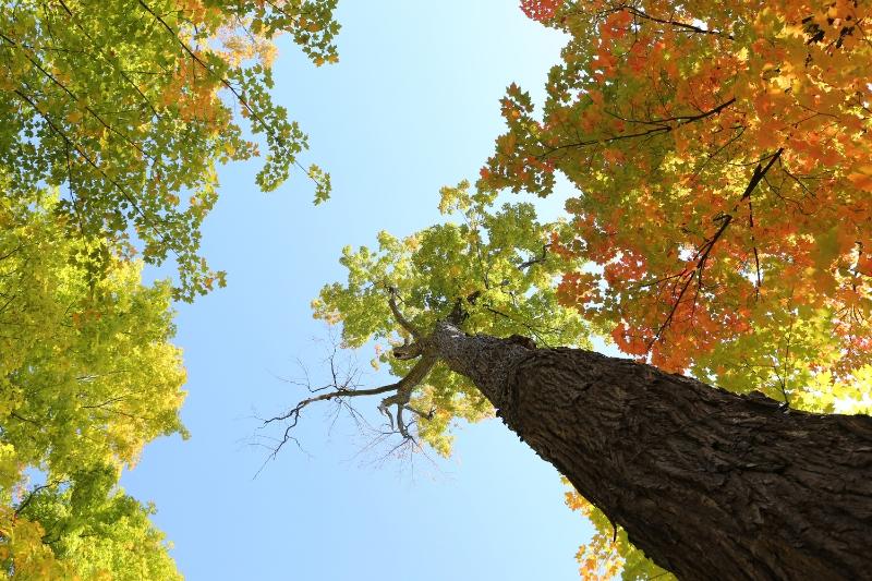 2014-10-Life-of-Pix-free-stock-photos-trees-autumn-leaves-sky-leeroy.jpg