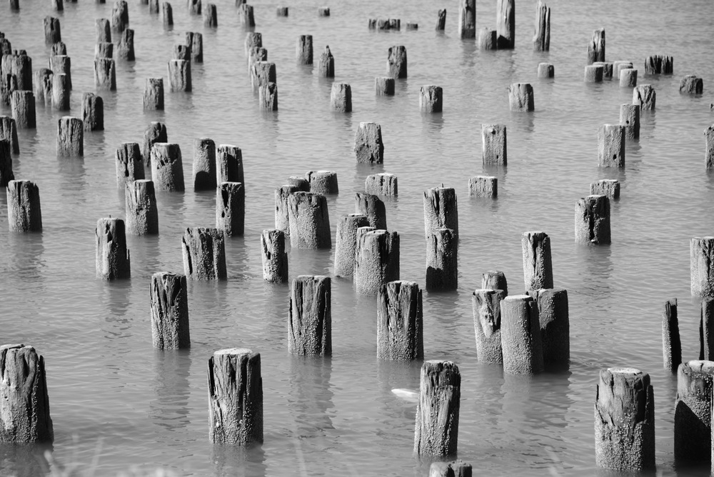 PIER 4 (2014) PHOTO PRINT 29.6X42 CM EDITION 1/3