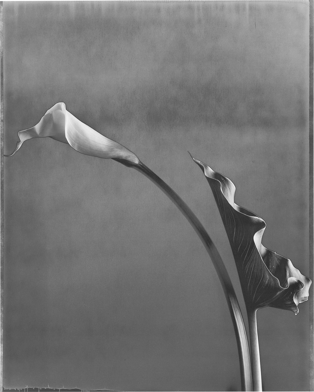 Calla and Leaf 2