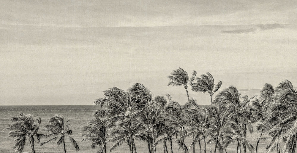 Big Island-4.jpg