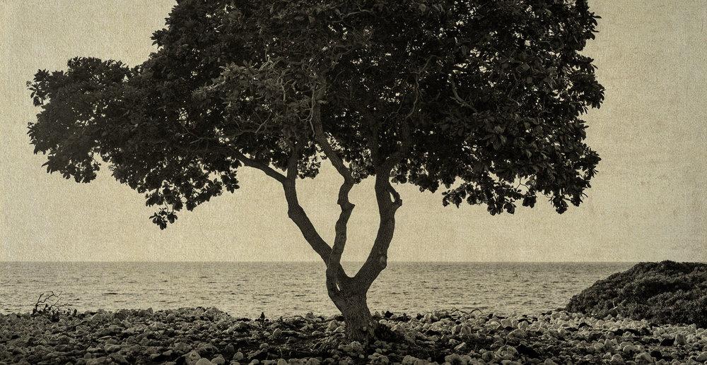 Big Island-2.jpg