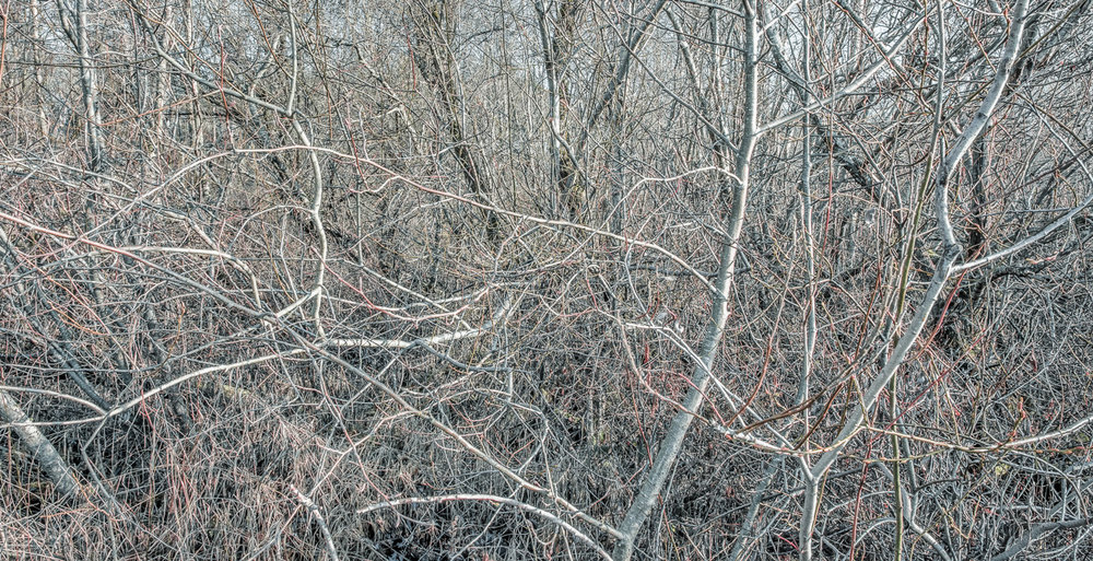 _Thicket 1 ()_.jpg