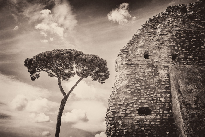 Palatine-Hill,Umbrella Tree, Rome.jpg
