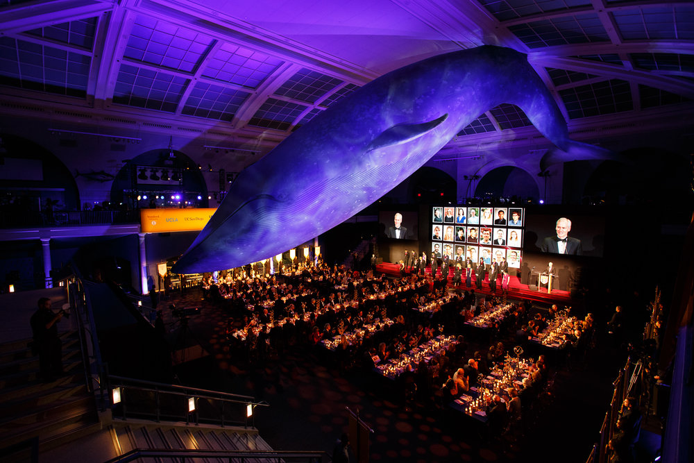 The Irma and Paul Milstein Family Hall of Ocean Life at the American Museum of Natural History