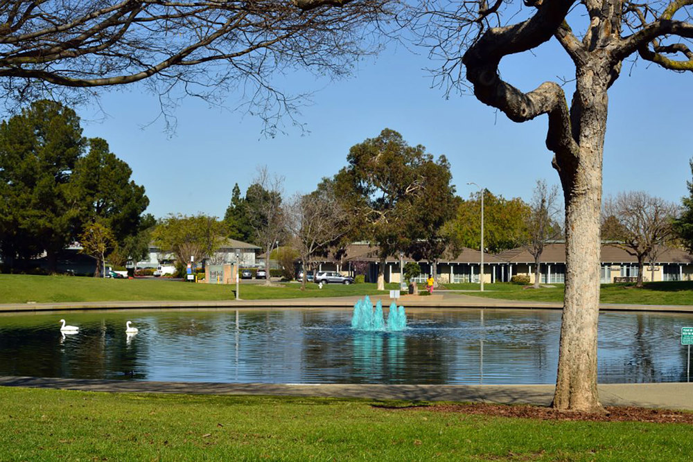 View of pond outside Sunnyvale Pottery Studio, located at City of   Sunnyvale Community Center.