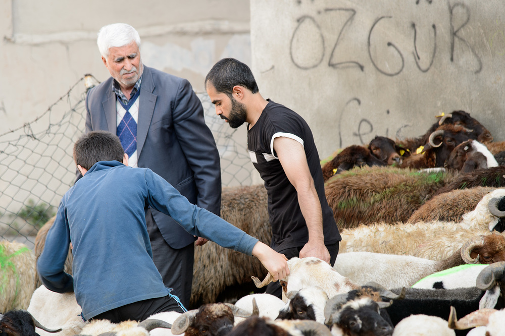 Impromptu sheep market in Istanbul