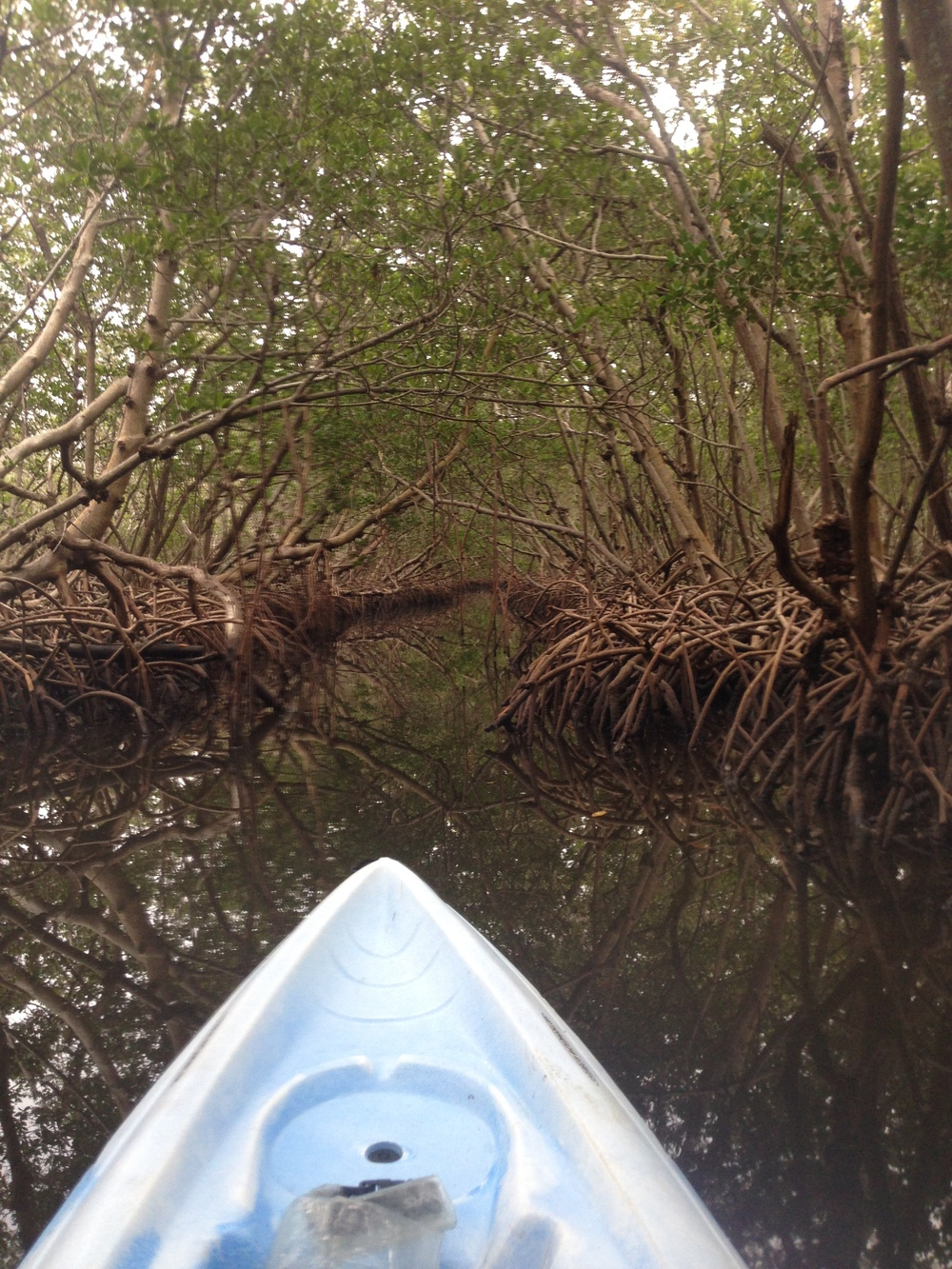 Paddling through the mangrove had me thinking about how this was probably how the native people of Florida might have traveled around Florida thousands of years ago!