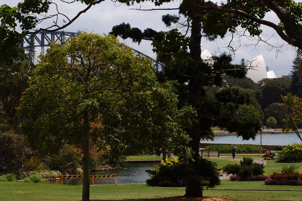 View of the Opera House and Sydney Harbour Bridge from Royal Botanic Gardens