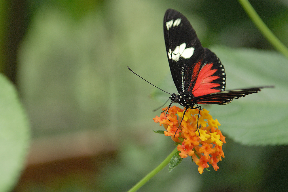 La Paz also features an enclosed  butterfly garden