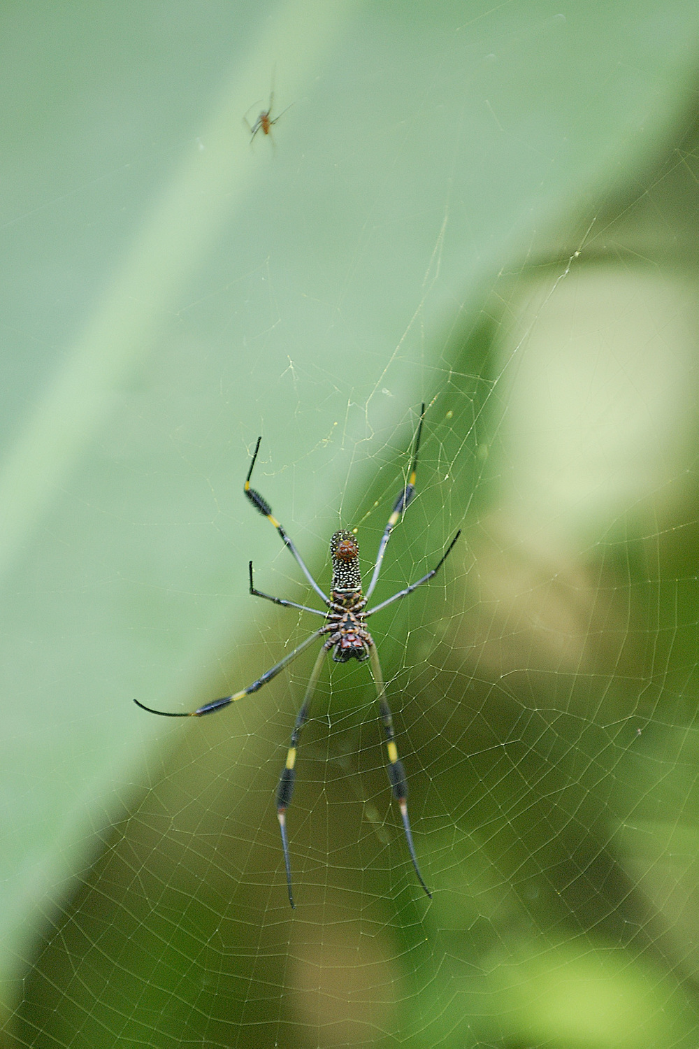 Did someone say SCARY BUGS?! A spider in Costa Rica