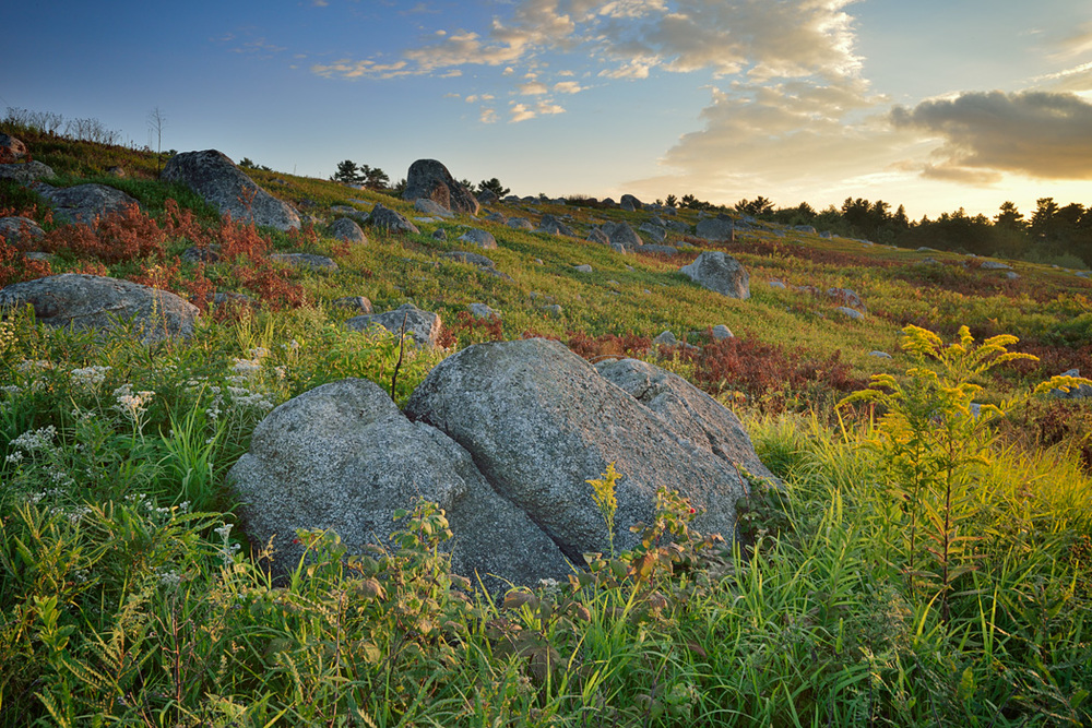 Maine blueberry barrens