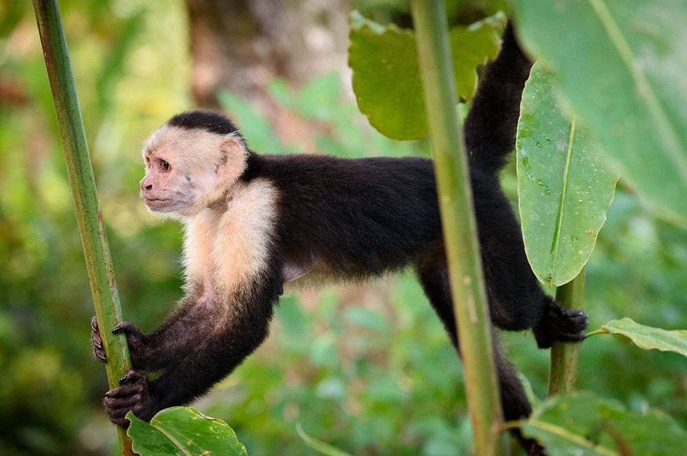 20160218 - Costa Rica (Mangrove Tour) - 003.jpg