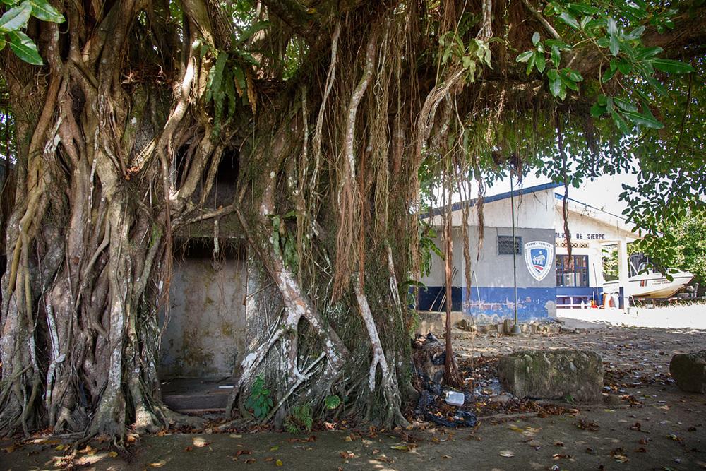 20160218 - Costa Rica (Mangrove Tour) - 297.jpg
