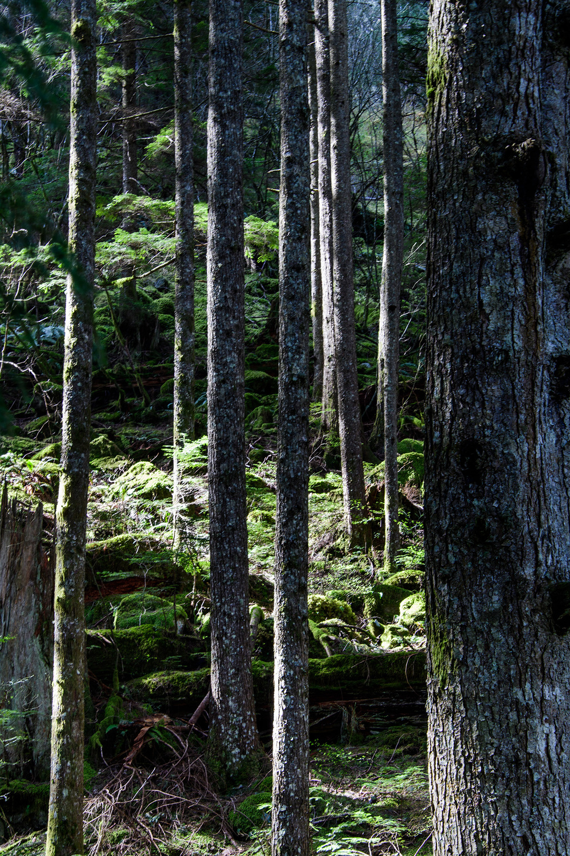 20160402 - Twin Falls Hike - 041.jpg
