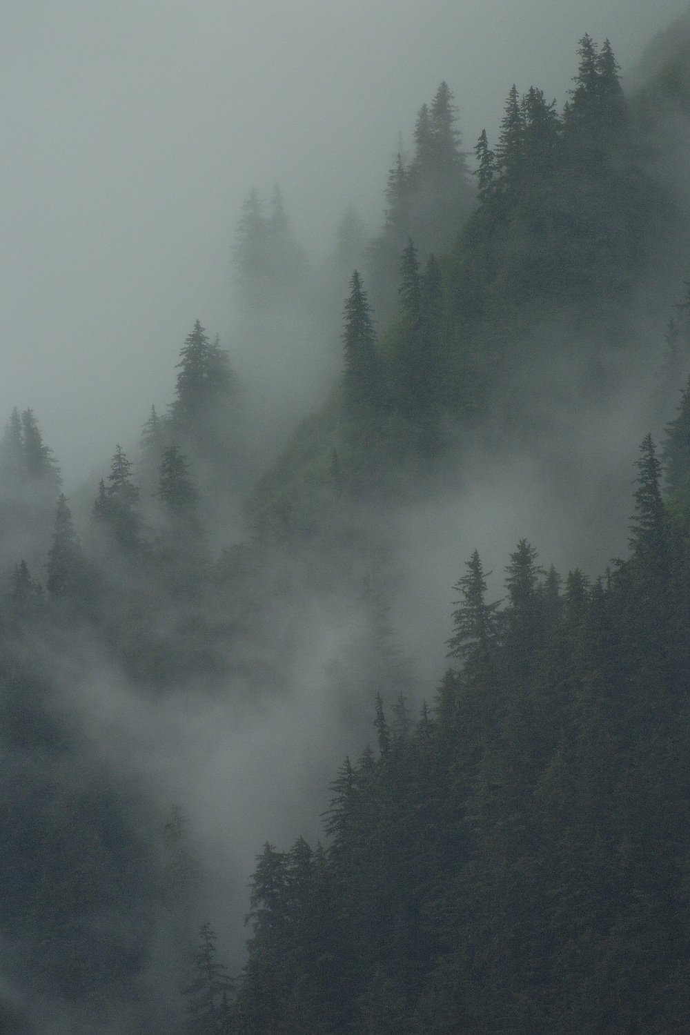 mists and trees of Mount Roberts