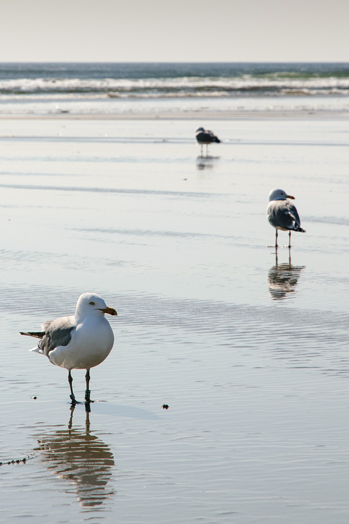 It's gulls day out at the beach...off season, and they have it all to themselves in Ogunquit!