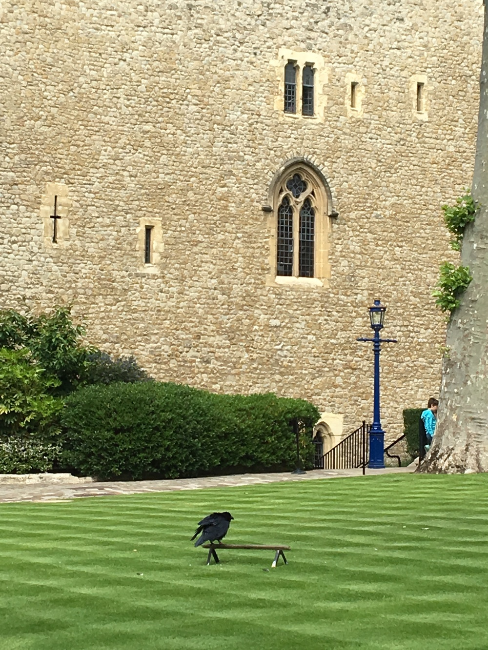 One of the resident ravens in front of the Beauchamp Tower, where the most famous prisoners made their marks, often bringing in their own stone cutters to leave their messages on the wall.