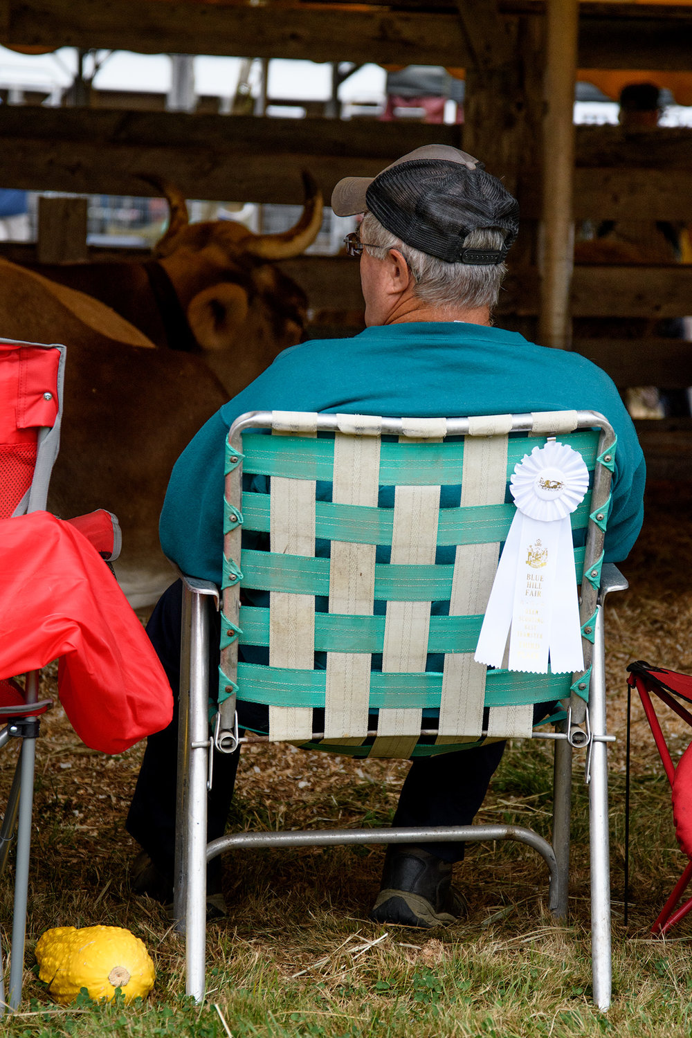 A farmer sits with his prize winning oxen