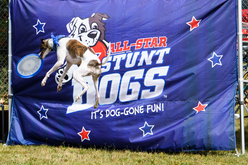 The Chris Perondi All Star Stunt Dog Challenge
