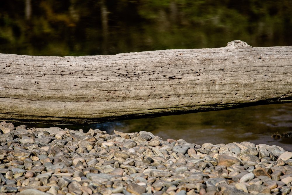 A piece of driftwood sits above the stone pier