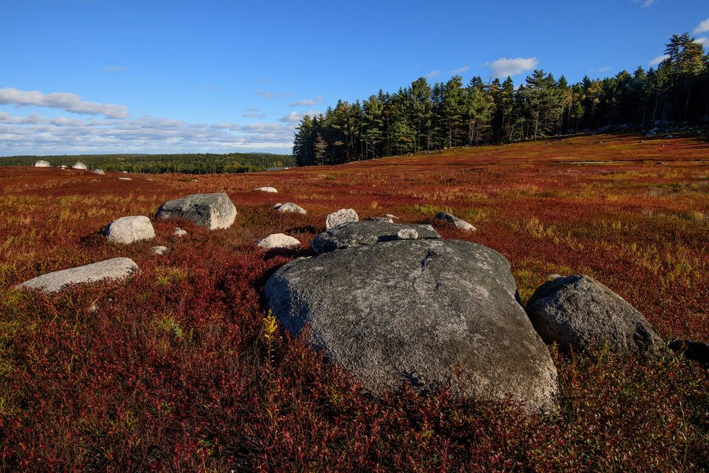 Blueberry barrens downeast turn brilliant red in the fall (and again in the spring) and make for dramatic leaf peeping scenery.