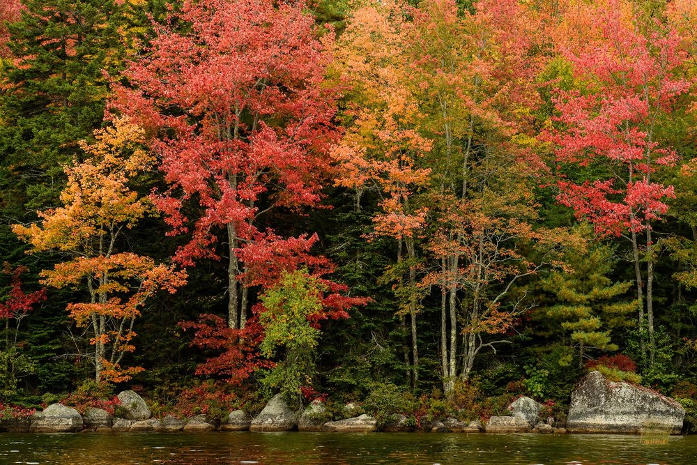The colorful shores of Walkers Pond