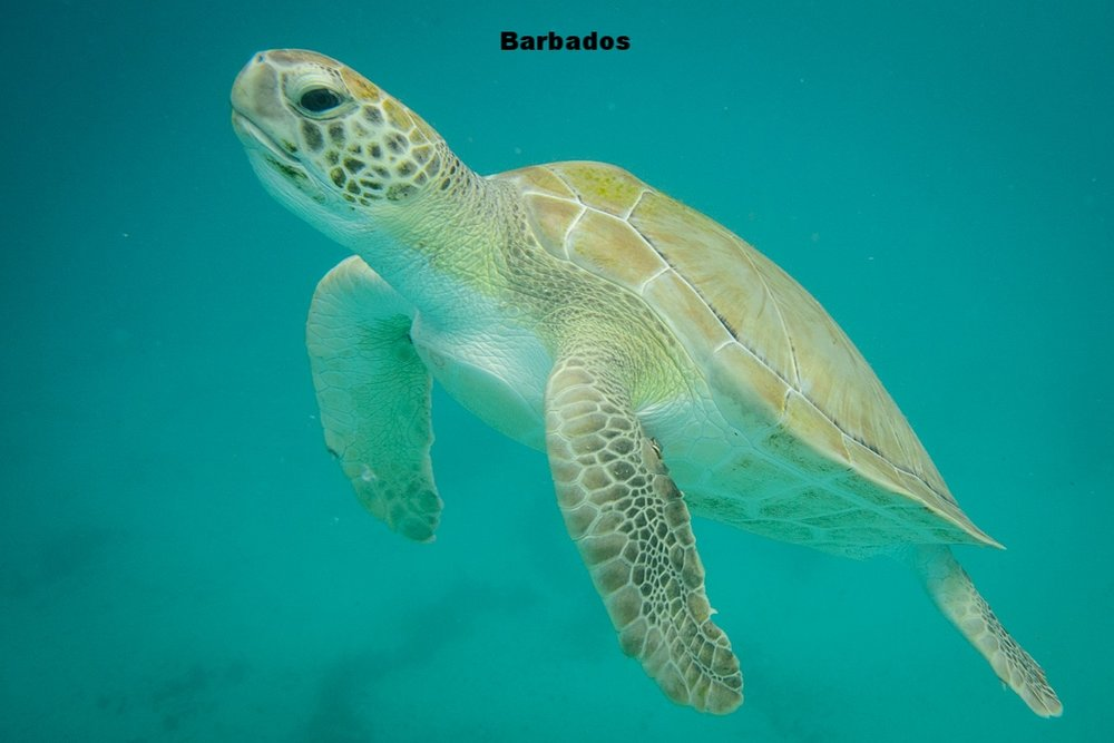 20150421 - Barbados - 0025.jpg