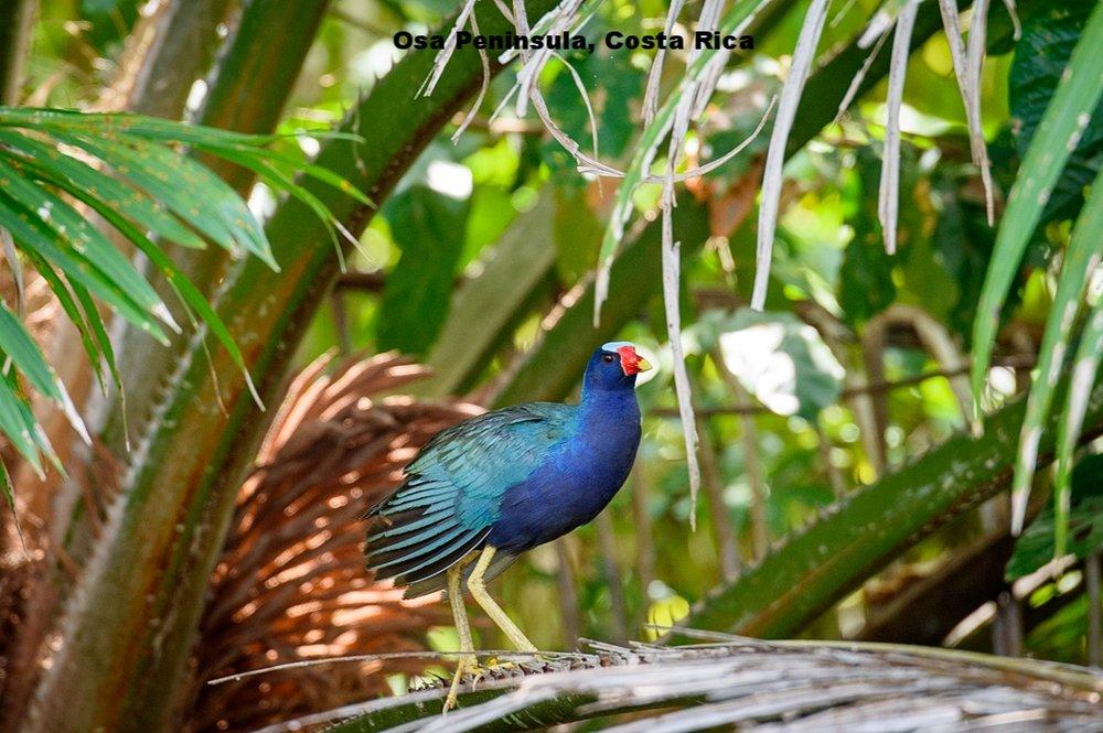 20160218 - Costa Rica (Mangrove Tour) - 710.jpg