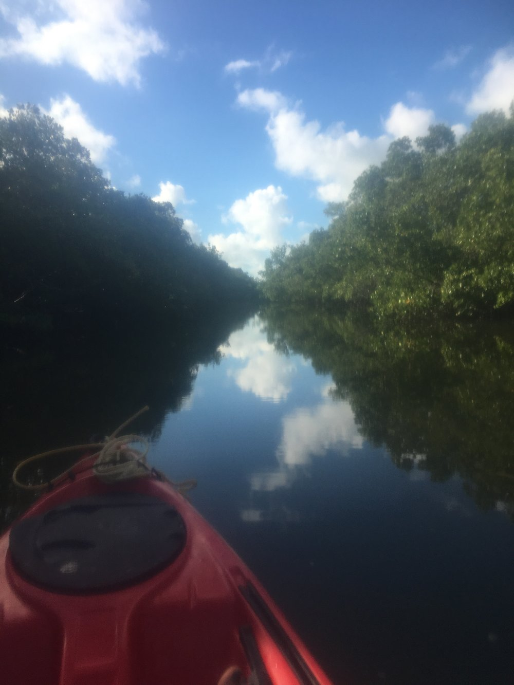Kayaking in the mangroves along the Calusa Blueway in Ft Myers.