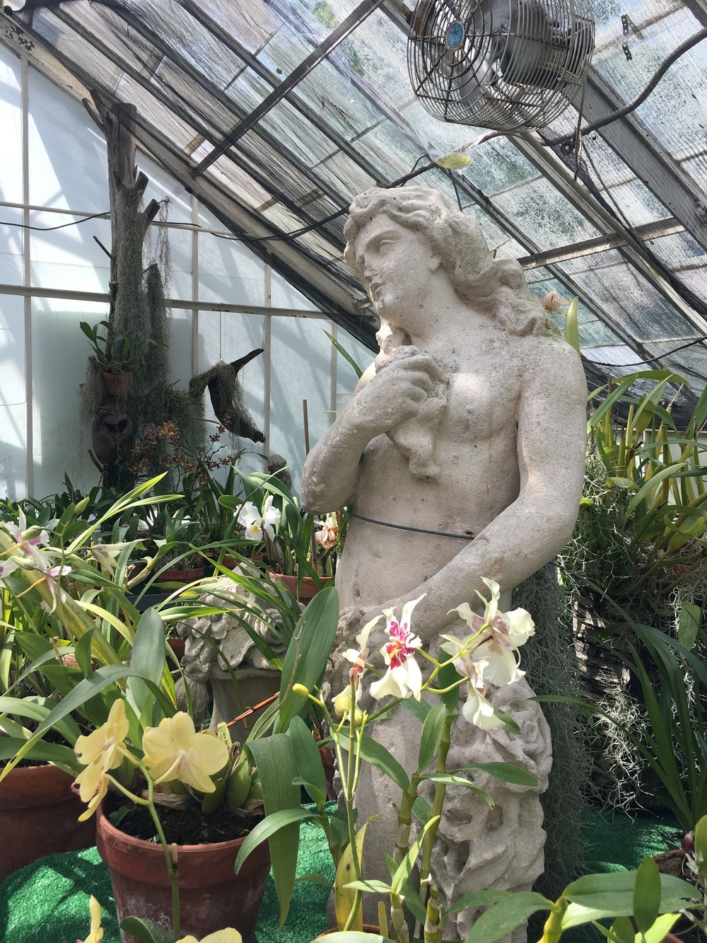 Garden statues are tucked among the lush foliage in the orchid green house.
