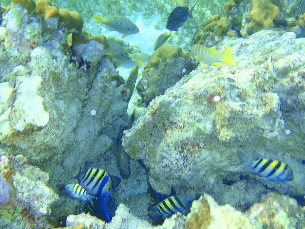 Grand Cayman Snorkeling, a popular stop for many Western Caribbean Cruises