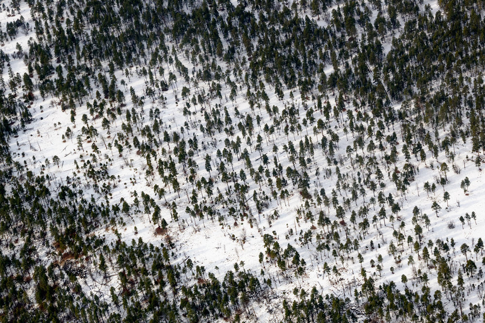 Ponderosa Pine Forests, from the air I could see animal tracks in the snow, likely elk herds.