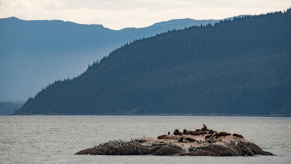 20180816 - Glacier Bay - 0928.jpg
