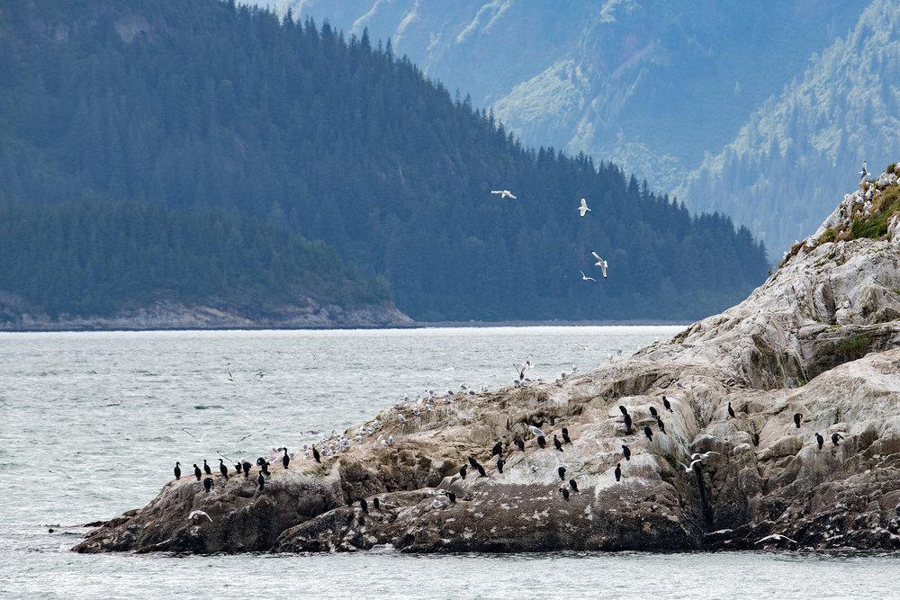 20180816 - Glacier Bay - 0943.jpg