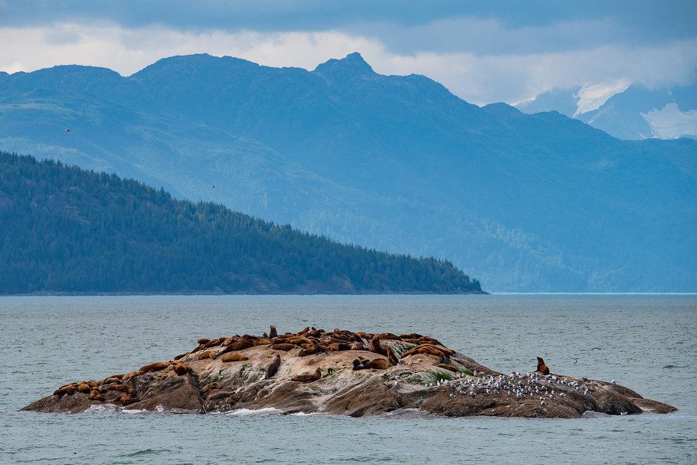 20180816 - Glacier Bay - 0958.jpg