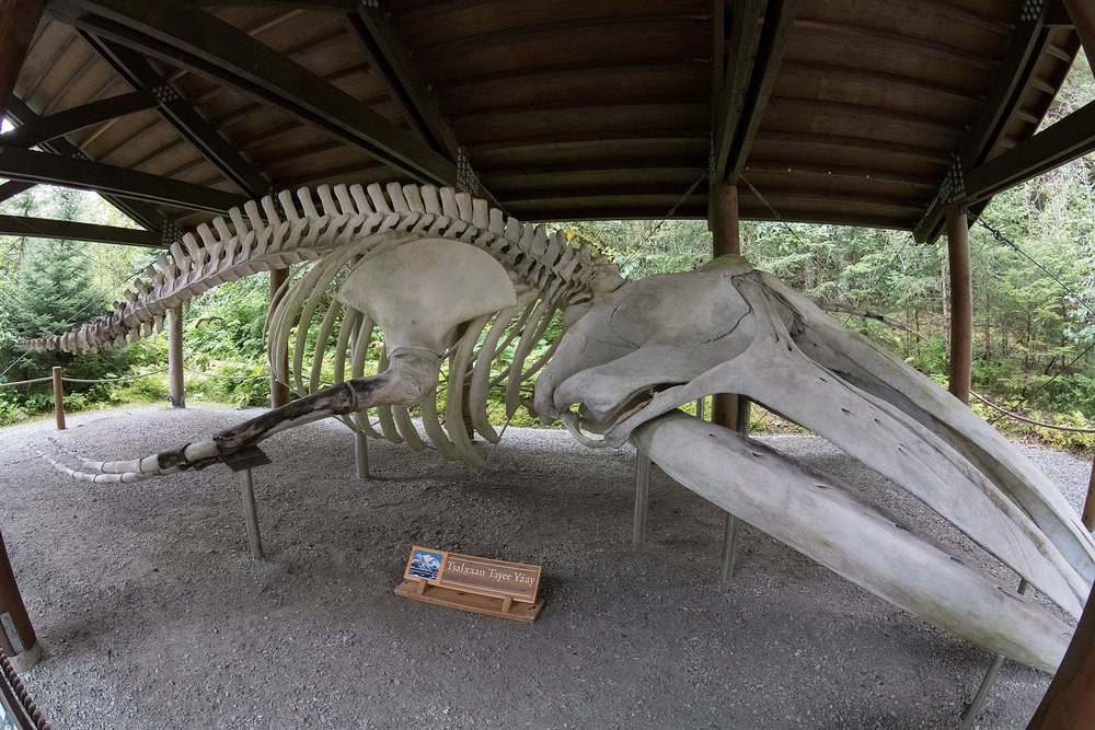 A whale skeleton was reconstructed at the visitors center, after it was struck by a cruise ship.