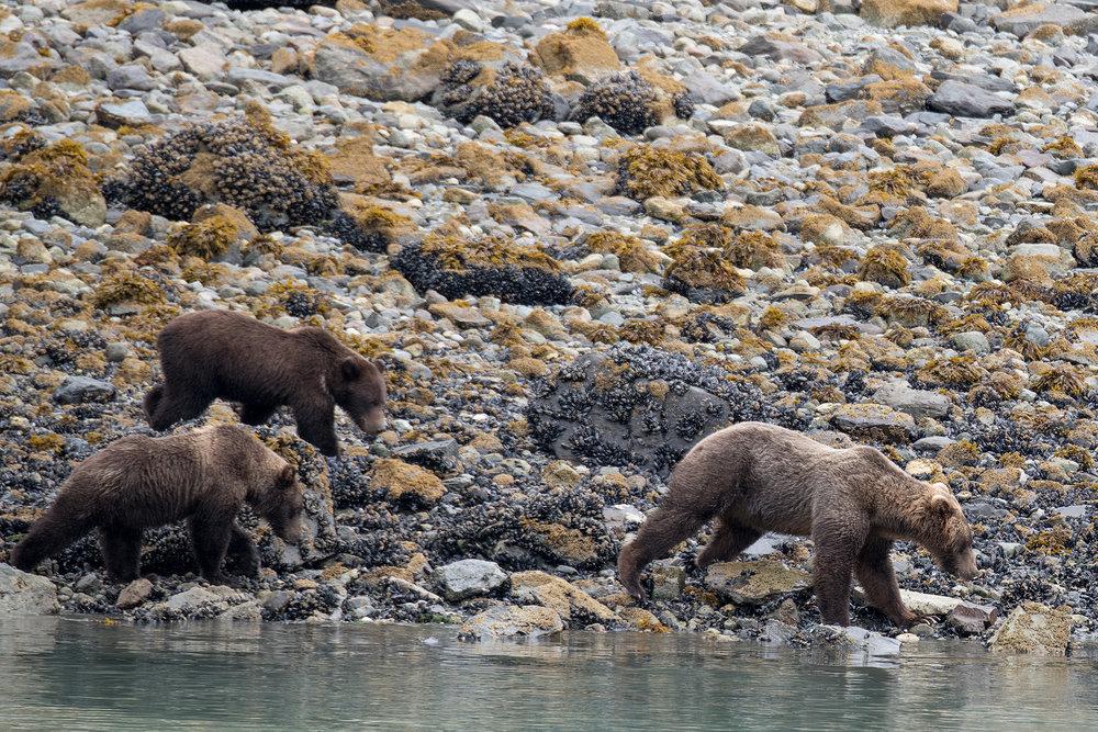 20180816 - Glacier Bay - 0673.jpg