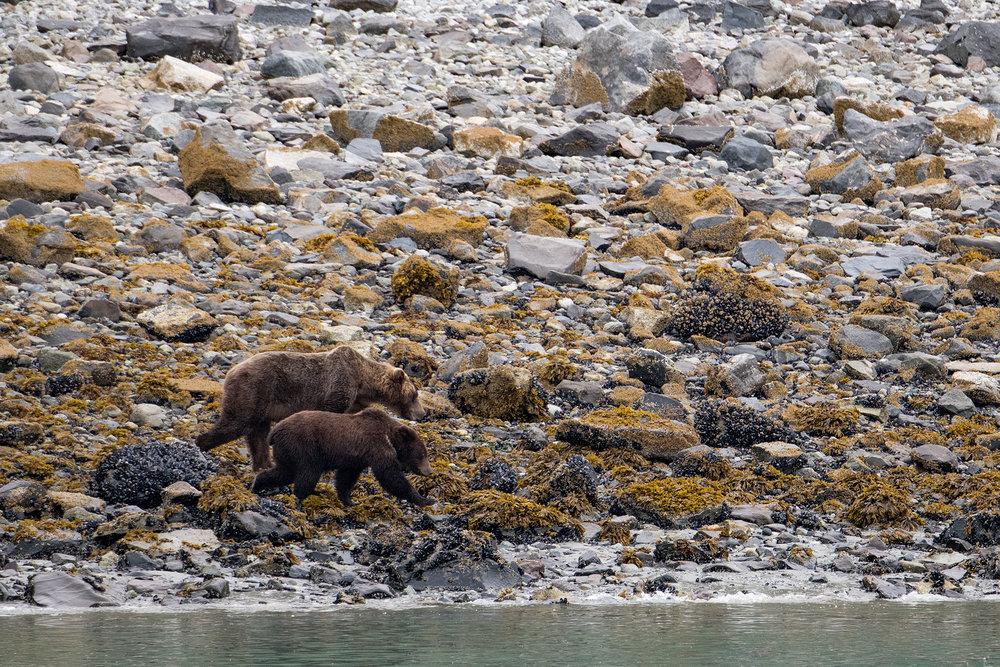 20180816 - Glacier Bay - 0553.jpg