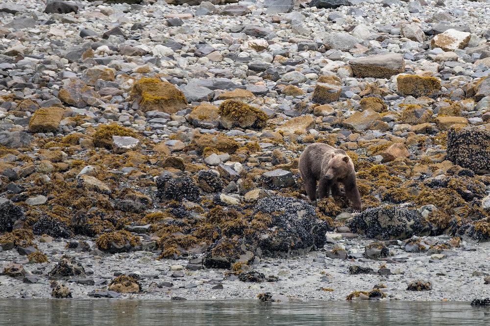 20180816 - Glacier Bay - 0561.jpg