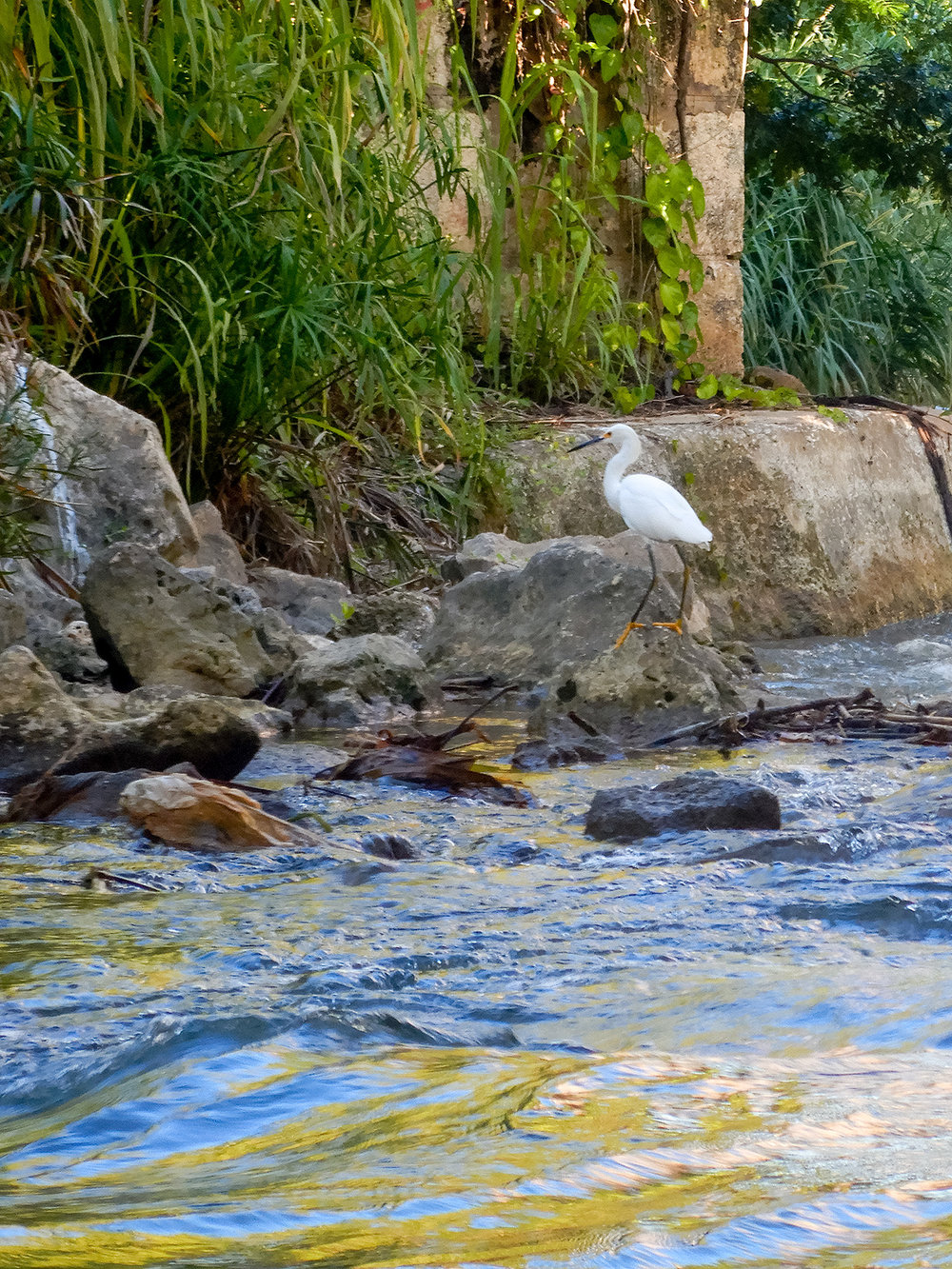 An egret along the river bank