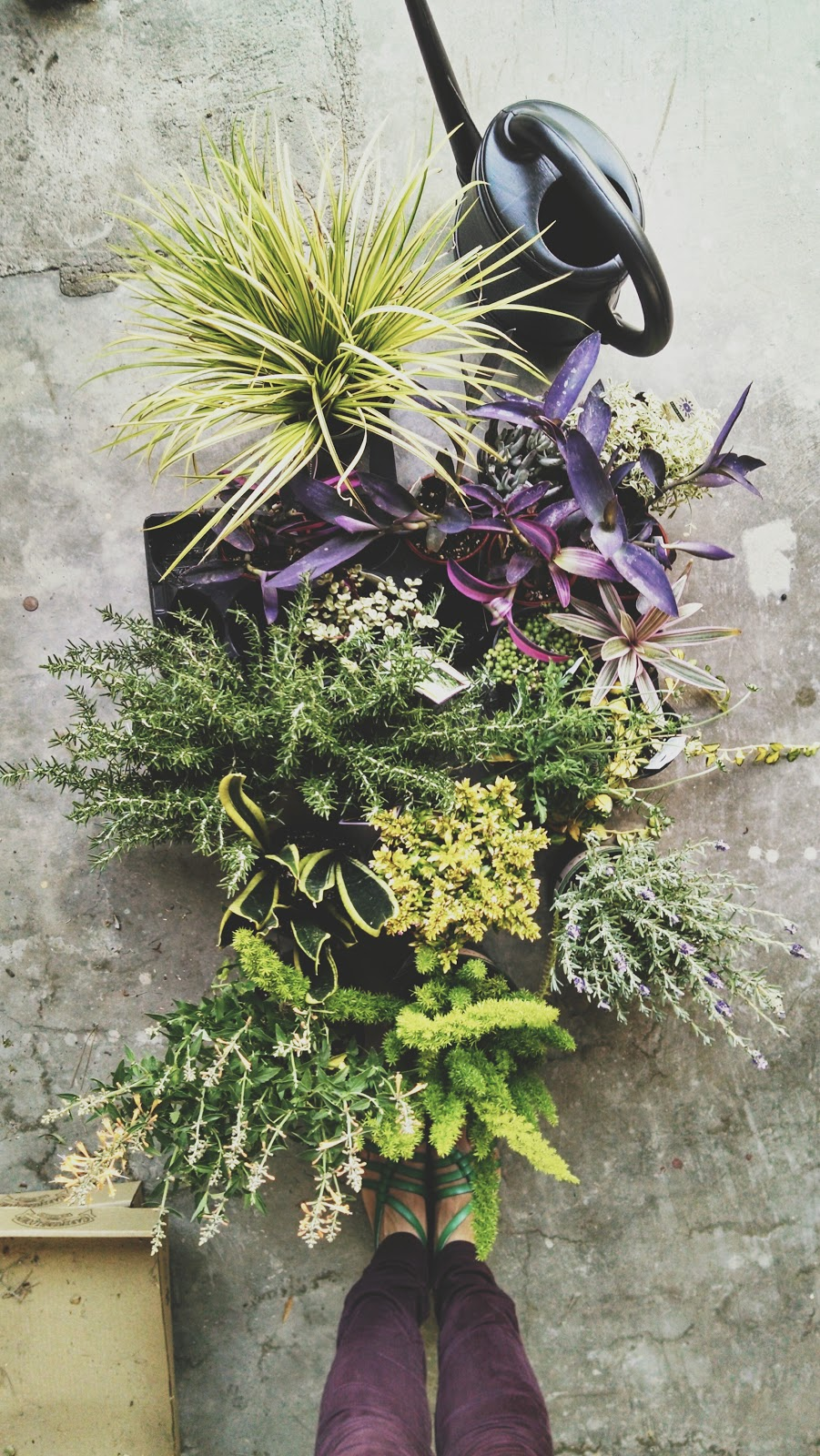 purples and greens, oh my!