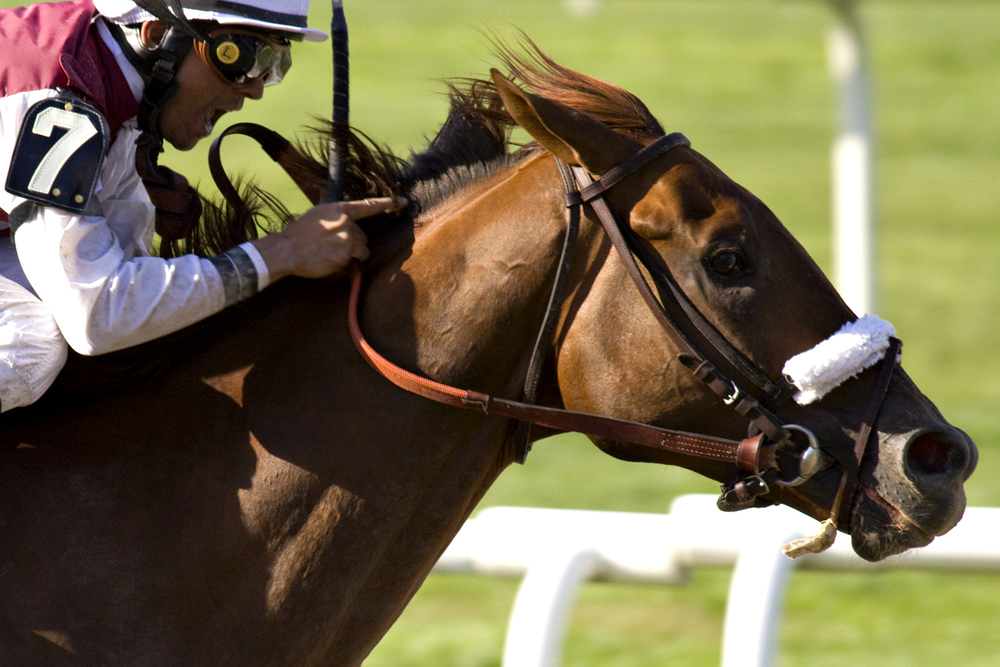 Millionaire and Breeders' Cup Classic placed Fly Down - $80,000 purchase