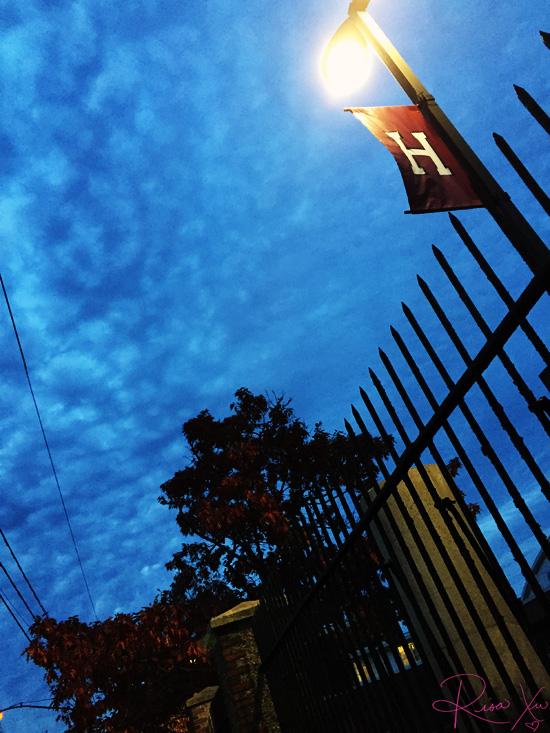 RisaXu_NovemberProject_Harvard