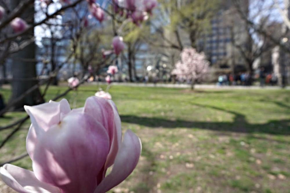 risa xu magnolia central park