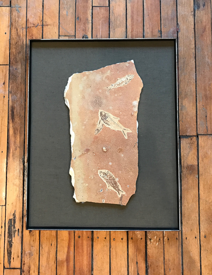 Fossil floated on panel into a steel float frame. (no glass)