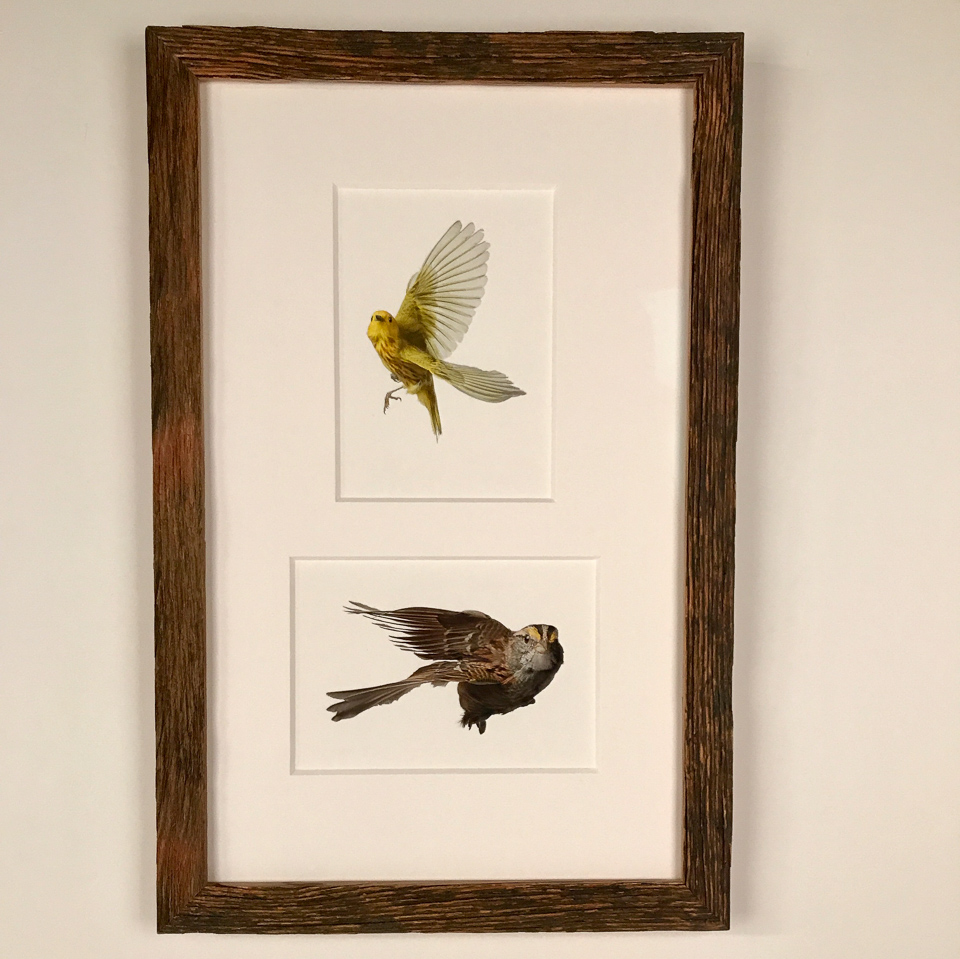Prints by Wild Birds Flying framed in reclaimed wood.