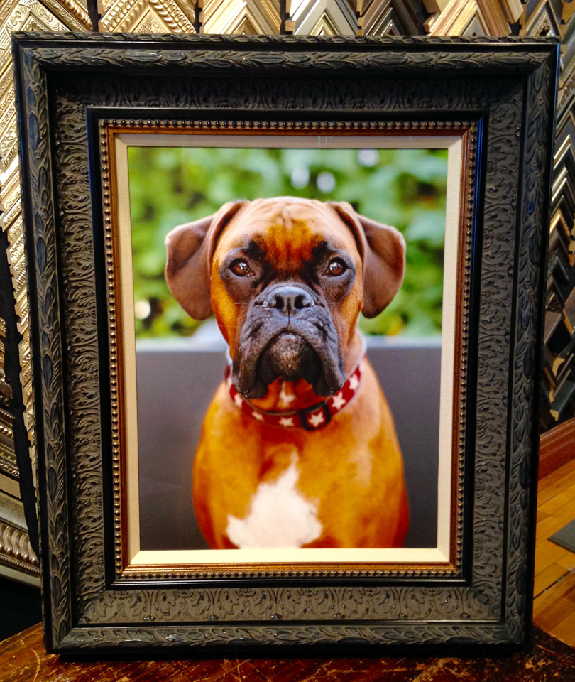 This portrait of a regal boxer needed an equally regal framing.